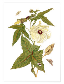 Premium poster musk plant with lepidoptera metamorphosis