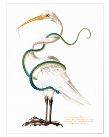 Poster Heron encircled by a snake, with a worm in his bill