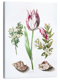 Canvas  Tulip with two myrtle branches and two shells - Maria Sibylla Merian