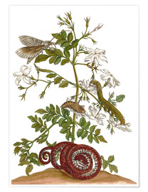 Premium poster jasmine with snake and lepidoptera metamorphosis