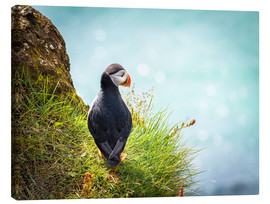Canvas  Puffin looking at the Sea - Sascha Kilmer