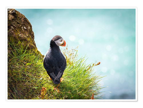 Premium poster Puffin looking at the Sea