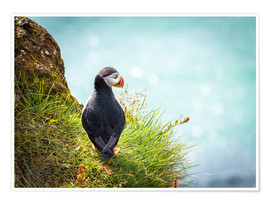 Premium poster  Puffin looking at the Sea - Sascha Kilmer