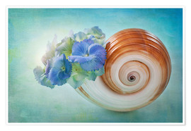 Premium poster  Blue flowers in a snail shell - Elena Schweitzer