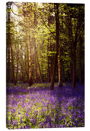Canvas print  Sunny bluebell wood - Sybille Sterk