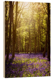 Wood print  Sunny forest with bluebells - Sybille Sterk