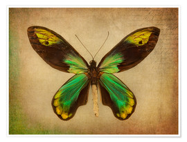 Poster Green butterfly