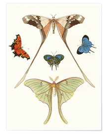 Premium poster  Different kinds of butterflies - German School