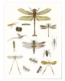 Premium poster  Strange insects - German School