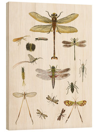 Wood print  Strange insects - German School
