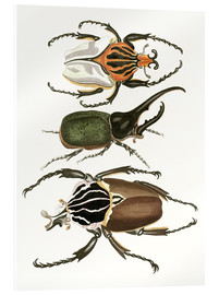 Acrylic print  Large and rare beetles - German School
