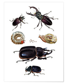 Premium poster  Strange beetles - German School