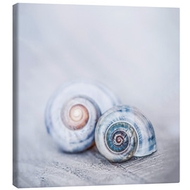 Canvas print  Blue Shells - Andrea Haase Foto