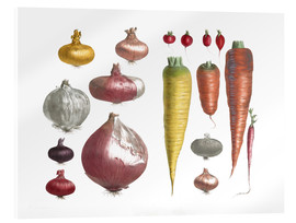 Acrylic print  Various Vegetables, including onions and carrots - E. Champin and Mlle. Coutance