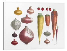 Aluminium print  Various Vegetables, including onions and carrots - E. Champin and Mlle. Coutance