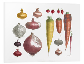 Forex  Various Vegetables, including onions and carrots - E. Champin and Mlle. Coutance