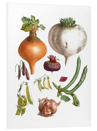 Forex  beans peas, turnips, swede, beetroot and onions - E. Champin and Mlle. Coutance