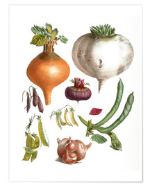 Poster  beans peas, turnips, swede, beetroot and onions - E. Champin and Mlle. Coutance
