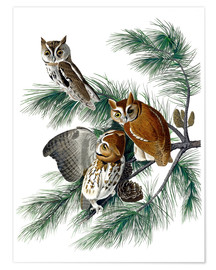 Premium poster Three owls