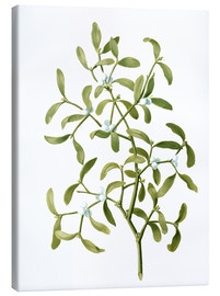 Canvas print  Mistletoe