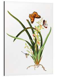 Aluminium print  Butterflies and a dragonfly on a plant