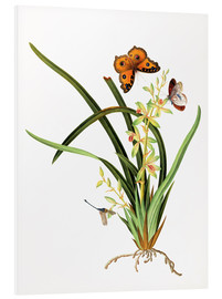 Foam board print  Butterflies and a dragonfly on a plant