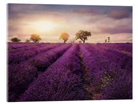 Acrylic glass  Lavender field at sunset, Provence - Elena Schweitzer