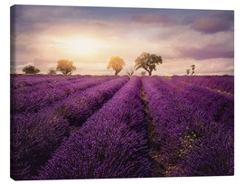 Canvas print  Lavender field at sunset, Provence - Elena Schweitzer
