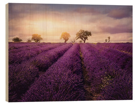 Wood  Lavender field at sunset, Provence - Elena Schweitzer