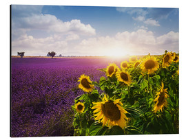 Aluminium print  Lavender and sunflowers fields , Provence - Elena Schweitzer