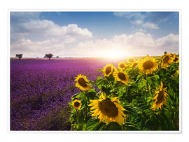 Premium poster  Lavender and sunflowers fields , Provence - Elena Schweitzer
