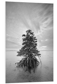 Forex  Long exposure of mangrove tree