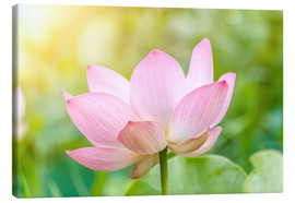 Canvas print  Lotus flower and Lotus flower plants