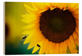 Wood print  Two bees in sunflower