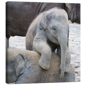 Canvas print  Cute elephant baby