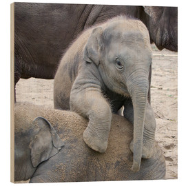 Wood print  Cute elephant baby