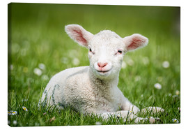 Canvas print  Happy lamb - Andreas Kossmann
