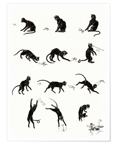 Premium poster The cat and the frog