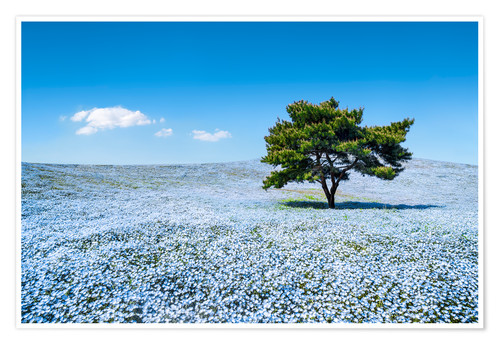 Premium poster Meadow with blue nemophila flowers in springtime