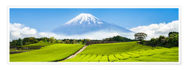 Premium poster Mount Fuji and tea fields in Shizuoka, Japan