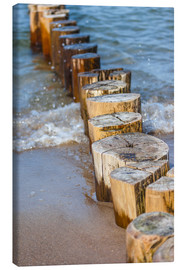 Canvas print  Groynes at the German Baltic Sea - Christian Müringer