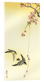 Acrylic glass  Starlings and Cherry Tree - Ohara Koson