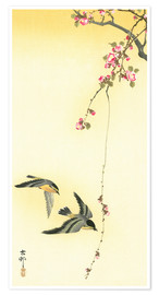 Premium poster Starlings and Cherry Tree