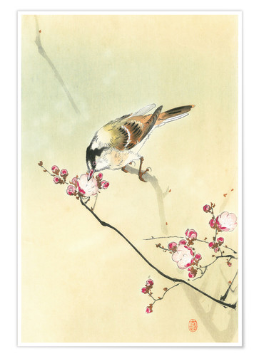 Premium poster Small Bird and Blossoms