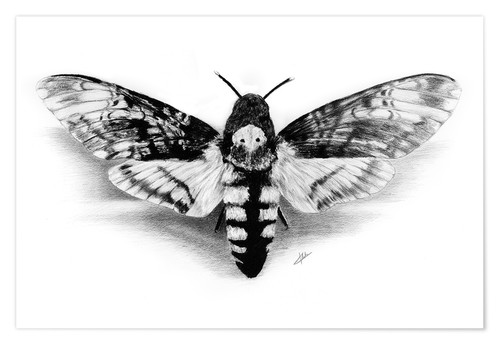 Premium poster Death Head Hawk Moth