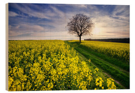 Wood  Rapsfeld in the spring, Germany - Dennis Fischer