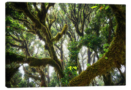 Canvas print  Old virgin forest, laurel, Madeira - Dennis Fischer