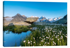 Canvas  Blooming of cotton grass at feet of Piz Bernina, Switzerland - Roberto Sysa Moiola