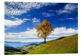 Acrylic print  Isolated tree in autumn, Funes Valley, South Tyrol, Italy - Roberto Sysa Moiola