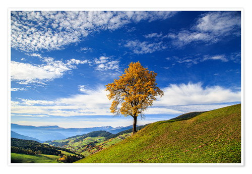 Premium poster Isolated tree in autumn, Funes Valley, South Tyrol, Italy